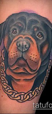 Фото тату ротвейлер – 06062017 – пример – 092 Rottweiler tattoo