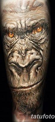 фото тату горилла от 27.08.2017 №014 – Gorilla tattoo – tatufoto.com