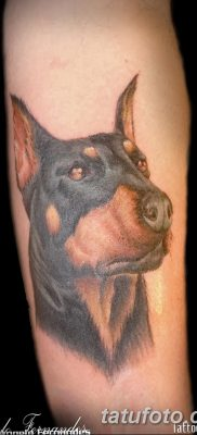 фото тату доберман от 18.08.2017 №002 – Doberman tattoo_tatufoto.com