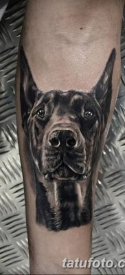 фото тату доберман от 18.08.2017 №016 – Doberman tattoo_tatufoto.com