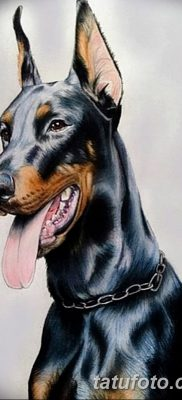 фото тату доберман от 18.08.2017 №022 – Doberman tattoo_tatufoto.com