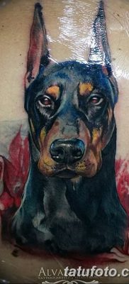 фото тату доберман от 18.08.2017 №034 – Doberman tattoo_tatufoto.com
