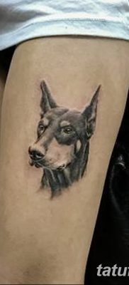 фото тату доберман от 18.08.2017 №066 – Doberman tattoo_tatufoto.com