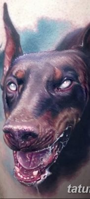 фото тату доберман от 18.08.2017 №076 – Doberman tattoo_tatufoto.com