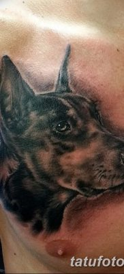 фото тату доберман от 18.08.2017 №087 – Doberman tattoo_tatufoto.com