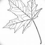 фото Эскизы тату клен от 29.09.2017 №003 - Sketches of tattoo maple - tatufoto.com