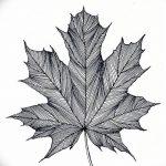 фото Эскизы тату клен от 29.09.2017 №027 - Sketches of tattoo maple - tatufoto.com