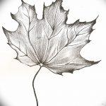 фото Эскизы тату клен от 29.09.2017 №031 - Sketches of tattoo maple - tatufoto.com