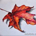 фото Эскизы тату клен от 29.09.2017 №089 - Sketches of tattoo maple - tatufoto.com