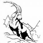 фото Эскизы тату козерог от 29.09.2017 №012 - Sketchesf a capricorn tattoo - tatufoto.com
