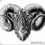 фото Эскизы тату козерог от 29.09.2017 №078 - Sketchesf a capricorn tattoo - tatufoto.com