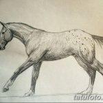 фото Эскизы тату конь от 29.09.2017 №021 - Sketches of a horse tattoo - tatufoto.com