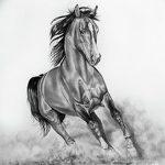 фото Эскизы тату конь от 29.09.2017 №058 - Sketches of a horse tattoo - tatufoto.com