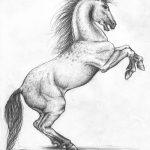 фото Эскизы тату конь от 29.09.2017 №064 - Sketches of a horse tattoo - tatufoto.com