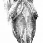 фото Эскизы тату конь от 29.09.2017 №123 - Sketches of a horse tattoo - tatufoto.com