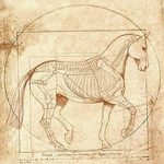 фото Эскизы тату конь от 29.09.2017 №138 - Sketches of a horse tattoo - tatufoto.com