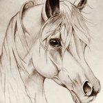 фото Эскизы тату конь от 29.09.2017 №173 - Sketches of a horse tattoo - tatufoto.com