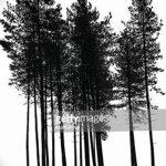 фото Эскизы тату лес от 29.09.2017 №046 - Sketches of a forest tattoo - tatufoto.com