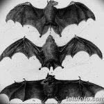 фото Эскизы тату летучая мышь от 27.09.2017 №017 - Sketches a bat tattoo - tatufoto.com