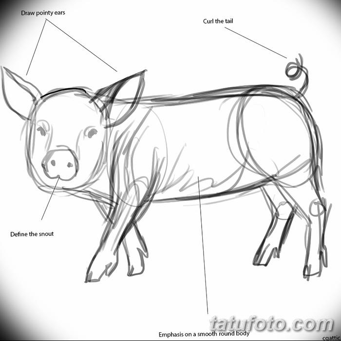 фото Эскизы тату свинья (кабан) от 26.09.2017 №001 - Sketches of a pig - tatufoto.com