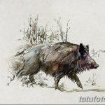 фото Эскизы тату свинья (кабан) от 26.09.2017 №012 - Sketches of a pig - tatufoto.com