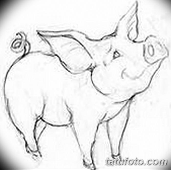 фото Эскизы тату свинья (кабан) от 26.09.2017 №016 - Sketches of a pig - tatufoto.com
