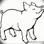 фото Эскизы тату свинья (кабан) от 26.09.2017 №017 - Sketches of a pig - tatufoto.com