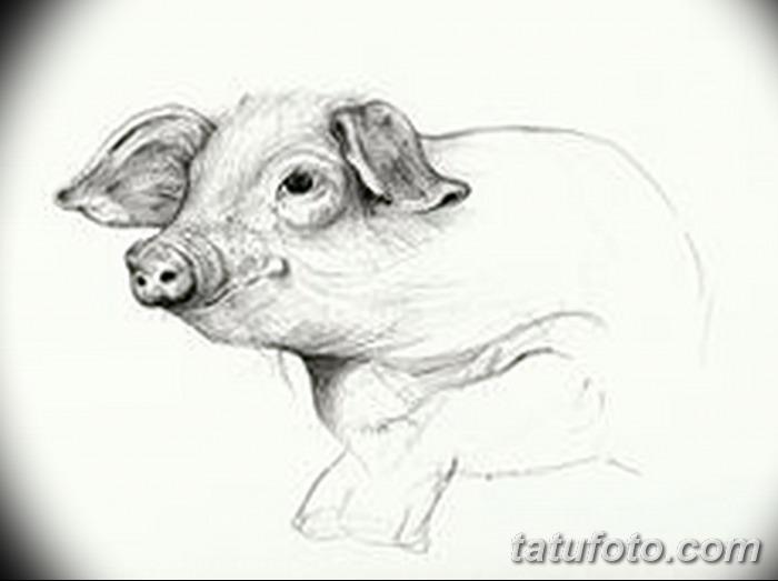 фото Эскизы тату свинья (кабан) от 26.09.2017 №018 - Sketches of a pig - tatufoto.com