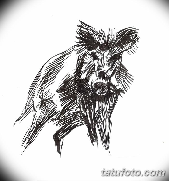 фото Эскизы тату свинья (кабан) от 26.09.2017 №019 - Sketches of a pig - tatufoto.com