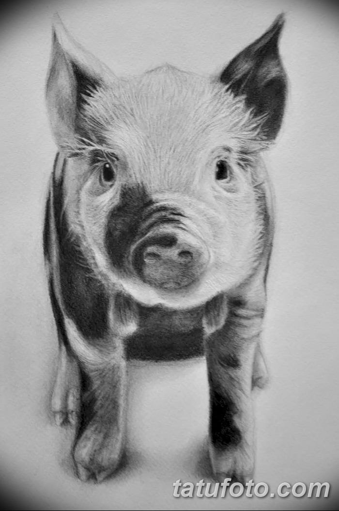 фото Эскизы тату свинья (кабан) от 26.09.2017 №023 - Sketches of a pig - tatufoto.com
