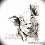 фото Эскизы тату свинья (кабан) от 26.09.2017 №025 - Sketches of a pig - tatufoto.com