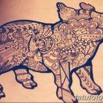 фото Эскизы тату свинья (кабан) от 26.09.2017 №032 - Sketches of a pig - tatufoto.com