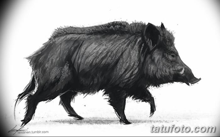 фото Эскизы тату свинья (кабан) от 26.09.2017 №035 - Sketches of a pig - tatufoto.com