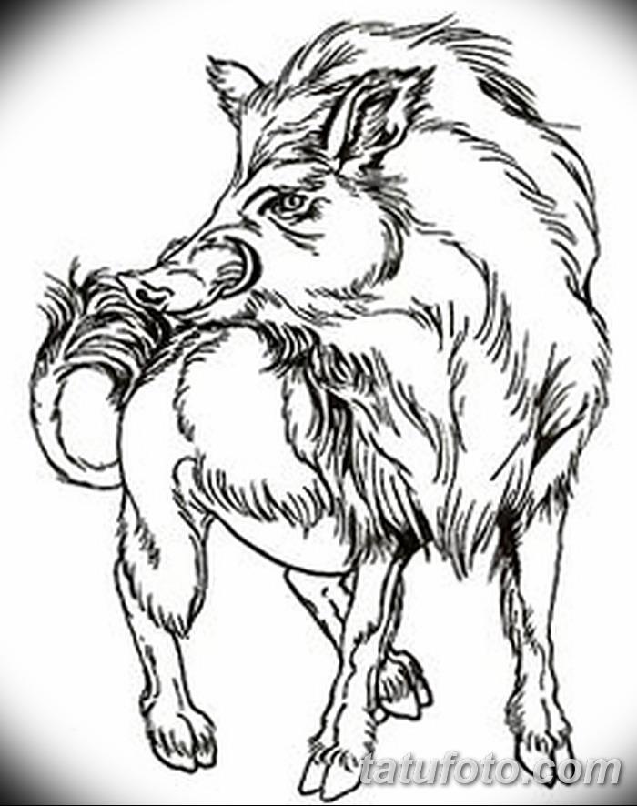 фото Эскизы тату свинья (кабан) от 26.09.2017 №037 - Sketches of a pig - tatufoto.com