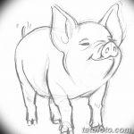 фото Эскизы тату свинья (кабан) от 26.09.2017 №039 - Sketches of a pig - tatufoto.com