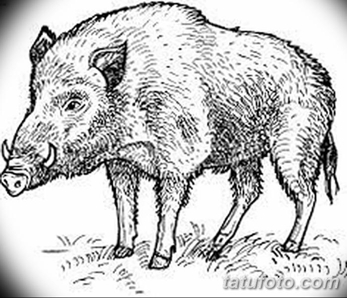 фото Эскизы тату свинья (кабан) от 26.09.2017 №046 - Sketches of a pig - tatufoto.com