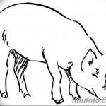 фото Эскизы тату свинья (кабан) от 26.09.2017 №049 - Sketches of a pig - tatufoto.com