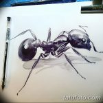 фото Эскиз тату муравей от 07.09.2017 №018 - Sketch of an ant tattoo - tatufoto.com