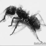 фото Эскиз тату муравей от 07.09.2017 №020 - Sketch of an ant tattoo - tatufoto.com