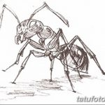 фото Эскиз тату муравей от 07.09.2017 №025 - Sketch of an ant tattoo - tatufoto.com