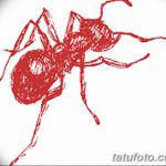 фото Эскиз тату муравей от 07.09.2017 №026 - Sketch of an ant tattoo - tatufoto.com