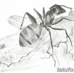 фото Эскиз тату муравей от 07.09.2017 №033 - Sketch of an ant tattoo - tatufoto.com