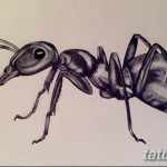 фото Эскиз тату муравей от 07.09.2017 №035 - Sketch of an ant tattoo - tatufoto.com