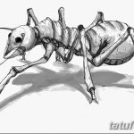 фото Эскиз тату муравей от 07.09.2017 №043 - Sketch of an ant tattoo - tatufoto.com 124151