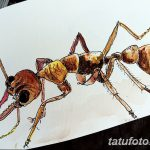 фото Эскиз тату муравей от 07.09.2017 №053 - Sketch of an ant tattoo - tatufoto.com