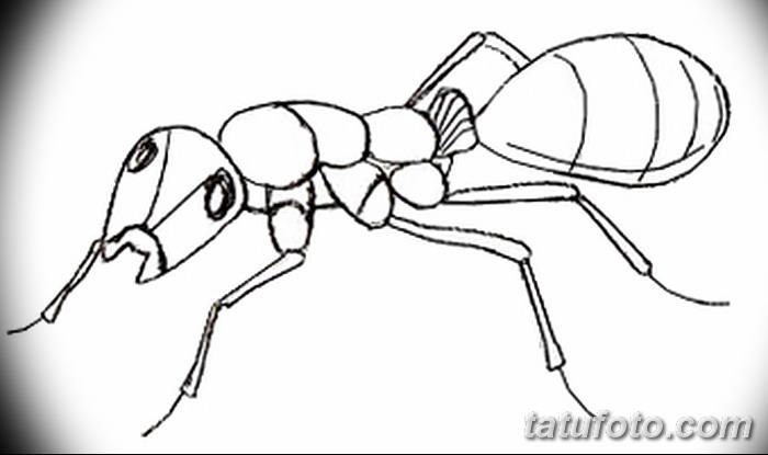 фото Эскиз тату муравей от 07.09.2017 №060 - Sketch of an ant tattoo - tatufoto.com