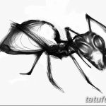 фото Эскиз тату муравей от 07.09.2017 №074 - Sketch of an ant tattoo - tatufoto.com