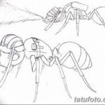 фото Эскиз тату муравей от 07.09.2017 №077 - Sketch of an ant tattoo - tatufoto.com