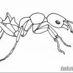 фото Эскиз тату муравей от 07.09.2017 №082 - Sketch of an ant tattoo - tatufoto.com