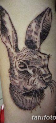 фото тату заяц от 02.09.2017 №003 – tatoos hare – tatufoto.com